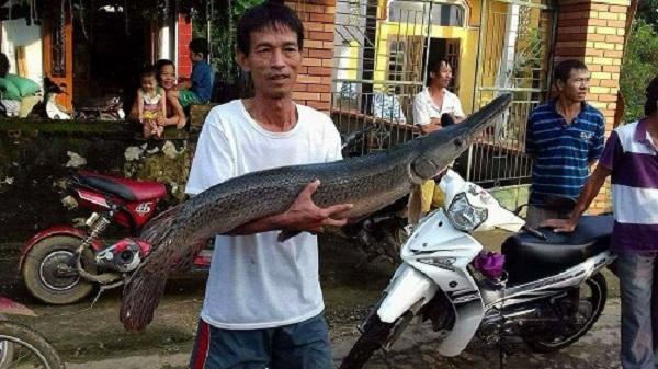 Thanh Hóa: Bắt được cá sấu hỏa tiễn 'khủng' khi kéo lưới trong dòng nước lũ
