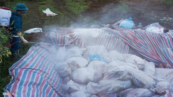Cận cảnh tiêu hủy đàn lợn ở Thanh Hóa chết trong nước lũ
