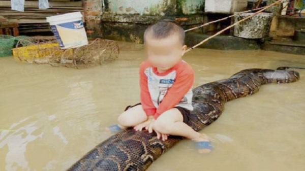 Bé trai cưỡi trăn ở Thanh Hóa: Xử phạt gia đình nuôi trăn 3 triệu đồng