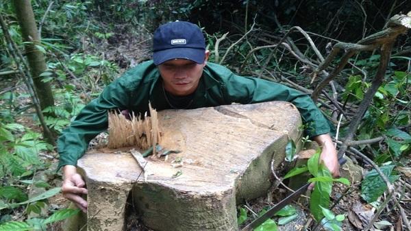 Thanh Hóa: Cần làm rõ những vụ phá rừng ở huyện Thường Xuân