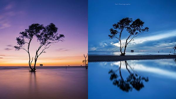 """Ở Tiền Giang có """"gốc cây cô đơn"""" phiên bản giữa bãi biển, lập team tới check-in thì quá đỉnh cho mùa Giáng sinh"""