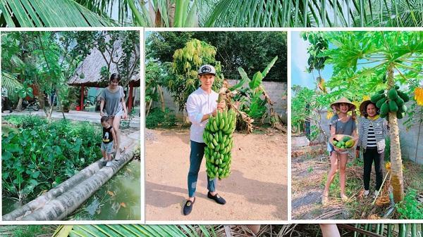 """""""Về quê nội"""" ở miền Tây, gia đình ca sỹ Lý Hải thích thú thu hoạch chuối, đi cầu dừa"""