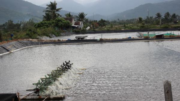 Ẩn họa từ máy sục khí nuôi tôm khiến ngư dân Ninh Thuận và các tỉnh khác gặp nạn