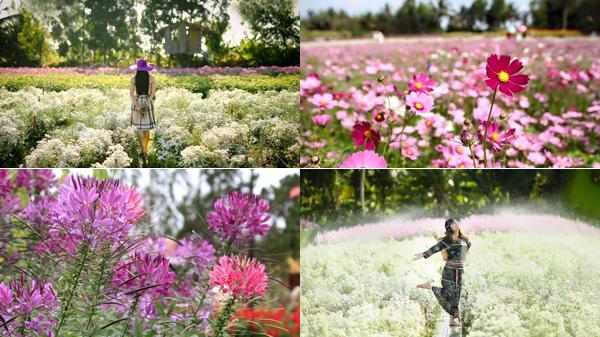 Thiên đường hoa tuyệt đẹp nổi tiếng đất Tiền Giang khiến du khách say đắm quên lối về