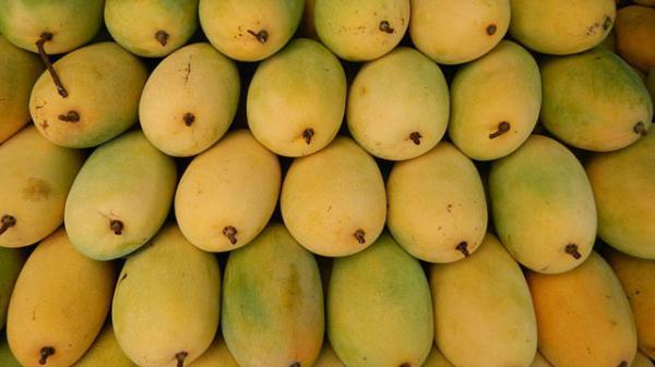 Dạo một vòng Tây Nam Bộ thưởng thức những đặc sản trái cây