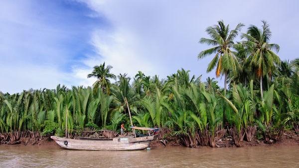 Lạ lùng trái dừa nước miền Tây