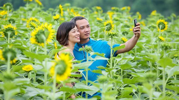 Hàng trăm người tới check-in với cánh đồng hoa hướng dương tuyệt đẹp ở giáp ranh Hà Nội - Hưng Yên