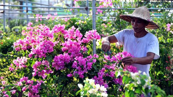Văn Giang (Hưng Yên) đổi thay từ nghề trồng hoa, cây cảnh
