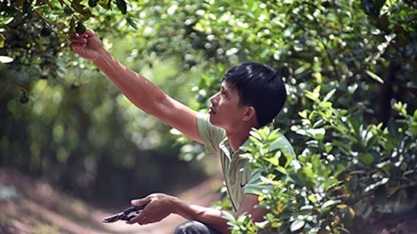 Hóng chuyện ở chợ, 7 năm sau anh nông dân Hưng Yên đã thành tỷ phú
