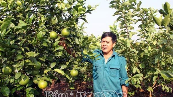 Người nông dân Hưng Yên thu lãi 600 triệu đồng/năm từ trang trại tổng hợp