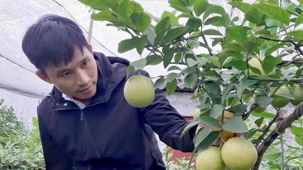 Từ 'kẻ trốn nợ' đến triệu phú trồng chanh ở Hưng Yên