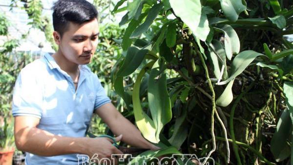 Ngưỡng mộ vườn lan tiền tỷ của chàng trai 9X ở Hưng Yên