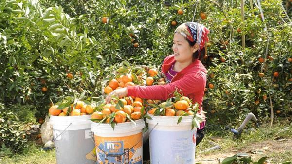 Hội chợ cam, bưởi và các sản phẩm đặc trưng huyện Lục Ngạn (Bắc Giang): Nhà vườn sẵn sàng đón khách
