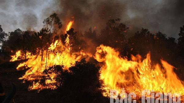 Bắc Giang: Tạm giữ đối tượng gây ra vụ cháy hơn 32 ha rừng ở huyện Yên Dũng