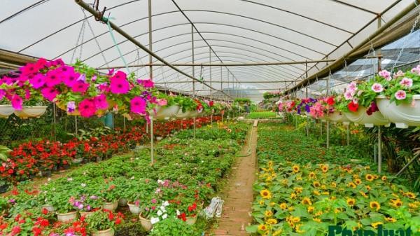 Có một làng hoa đẹp ít người biết ở Hưng Yên