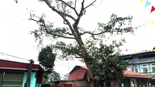 Chuyện kì lạ ở Bắc Giang: Trai gái tuyệt đối không yêu và lấy nhau ở hai làng sát vách