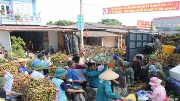 Bắc Giang: Giá vải sớm Phúc Hòa dao động từ 25-35 nghìn đồng/kg