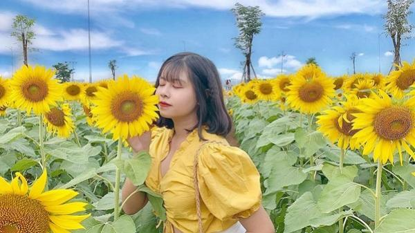 Mê mệt cánh đồng hoa hướng dương đang nở rộ nơi ngoại ô Sài Gòn