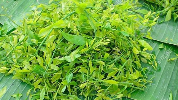 Hà Nam: Mùa rau sắng...