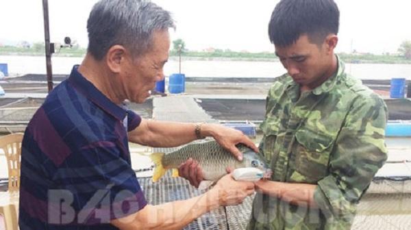 Hải Dương: Cựu chiến binh kiếm tiền tỷ mỗi năm từ nuôi cá từ cá đặc sản