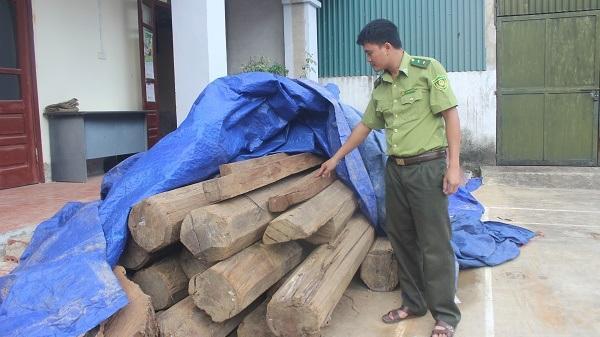 Điện Biên: Hạn chế hợp pháp hóa tang vật lâm sản sau đấu giá
