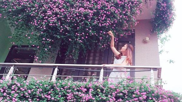 Mặt tiền ngôi nhà Điện Biên đẹp như tranh vẽ nhờ phủ kín hoa màu tím rực rỡ