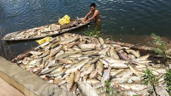 Khởi tố điều tra vụ 4 tấn cá chết ở xã Cộng Hòa