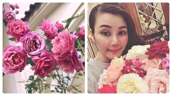 Khoảng sân nhà ngát hương hoa hồng của người phụ nữ xinh đẹp ở Hòa Bình