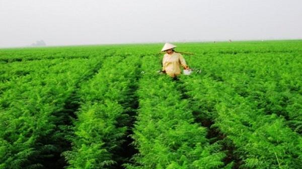 Hải Dương: Hỗ trợ 28,2 tỷ đồng xây hạ tầng 6 dự án nông nghiệp