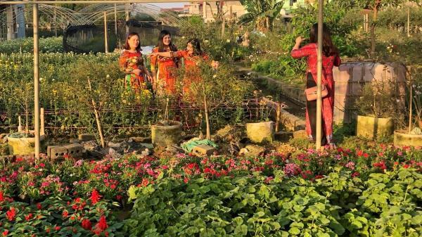 Ninh Bình: Làng hoa Ninh Phúc rộn ràng vào tết