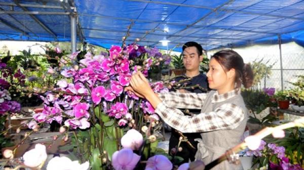 Khai mạc chợ hoa xuân thành phố Ninh Bình Tết Canh Tý 2020