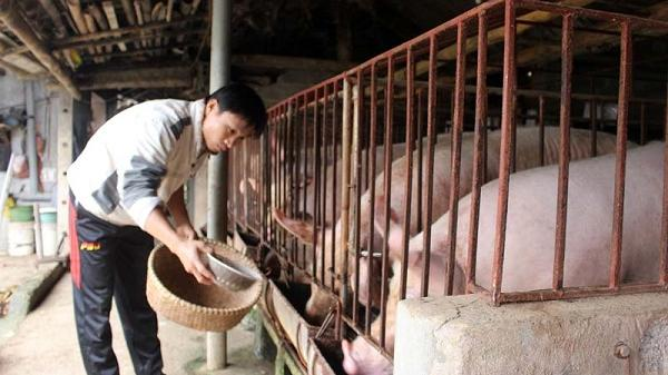 Cận Tết, giá thịt lợn trên thị trường tỉnh Hòa Bình giảm sâu