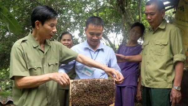 Yên Bái: Minh Bảo - nơi có những hộ hàng trăm đàn ong mật