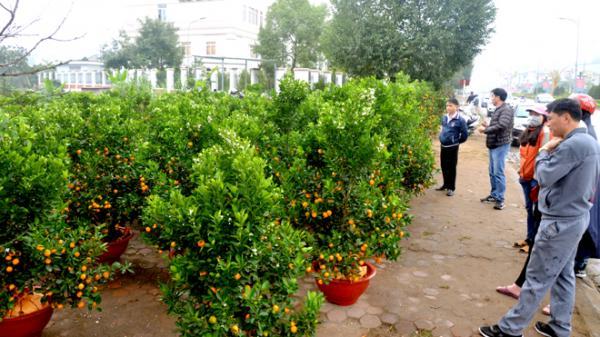 Yên Bái: Rộn ràng chợ hoa Tết trên đường phố