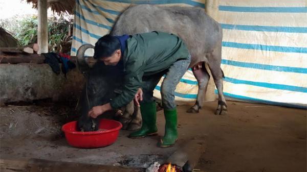 Yên Bái: Chủ động phòng chống rét và dịch bệnh cho đàn vật nuôi do thời tiết diễn biến khó lường