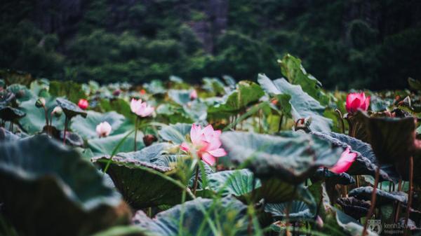 Ninh Bình: Vẻ đẹp khó cưỡng mùa sen ở chùa Bích Động