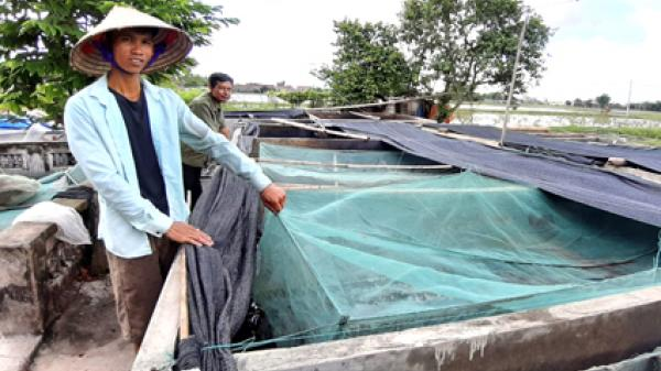 Ninh Bình: Chàng trai 8X nuôi ếch Thái Lan thu hàng trăm triệu đồng/năm