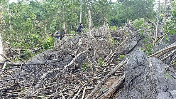 """Thấy gì qua vụ """"phá rừng"""" ở Tủa Chùa?"""