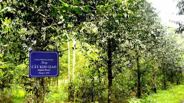Ninh Bình: Đến Cúc Phương - nghe kể về sự tích cây Kim Giao