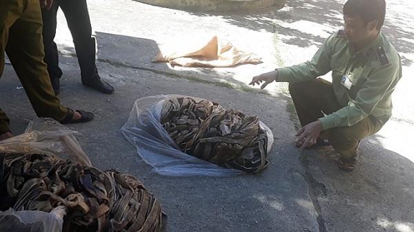 Điện Biên: Tiêu hủy hơn 2 tạ da trâu đã bốc mùi hôi thối