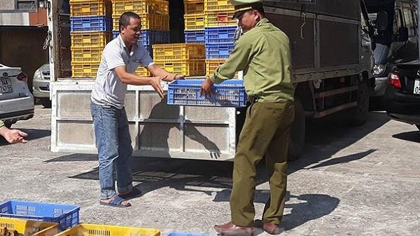 Phát hiện và tiêu hủy 4.000 con gà nhập lậu từ Trung Quốc