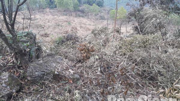 Bắc Giang: 2 bị cáo phá rừng tại huyện Yên Thế lĩnh án hơn 6 năm tù