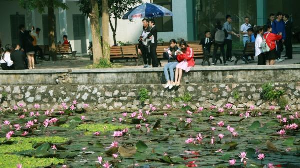 Sống áo nghìn like với hồ nước tím biếc giữa khuôn viên ĐH Bách Khoa Hà Nội