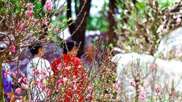 Thời tiết từ lễ ông Công ông Táo đến mồng 2 Tết Âm lịch Kỷ Hợi 2019