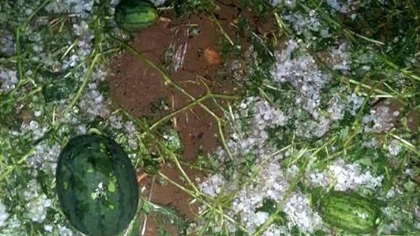 Lai Châu: Trận mưa đá thứ 3 trong tháng gây thiệt hại hàng chục tỉ đồng