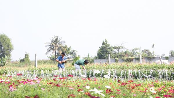 Làng hoa Tết ven Sài Gòn thời 4.0: Livestream sản phẩm, nhiều người tìm đến tận vườn mua