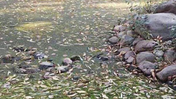 Bức ảnh gây tranh cãi nhất hôm nay: 99% người nghĩ rằng đây là cảnh lá rụng kín mặt đất và nhầm lẫn tai hại, bạn thì sao?