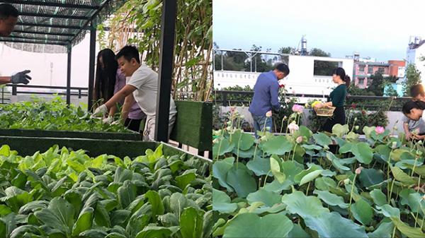 Tầng thượng nhà ba tầng tràn ngập hoa sen, dồi dào rau củ quả giữa lòng Sài Gòn khiến con dân thành thị thích mê