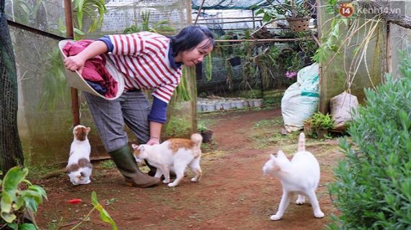 Nữ thạc sĩ Sài Gòn bỏ phố lên rừng, trồng hoa và sống trong ngôi nhà nhỏ với 5 chú mèo ở Đà Lạt
