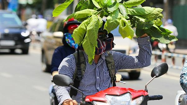 Tết này, Sài Gòn có thể nóng đến 35 độ C